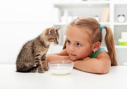 Social network, ovvero come ti stresso il micio: non solo i bambini sono oggetto di troppe aspettative