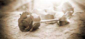 fiore, lutto, femminicidio