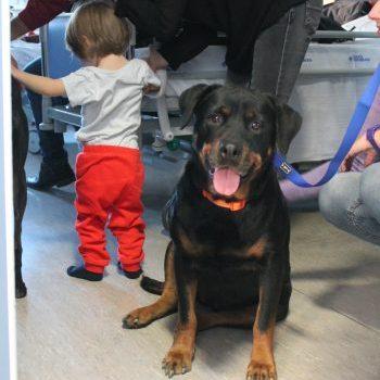 Ravenna, dopo un anno di sperimentazione inaugura in Pediatria il progetto di pet therapy